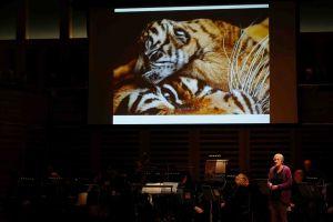 21CT Onscreen Pre Concert Tiger Cubs